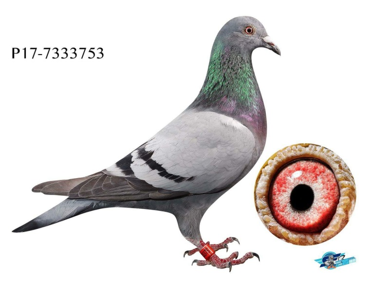 753 Cachopas